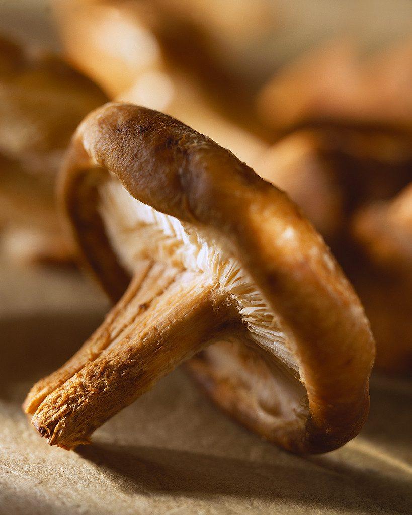 Close-Up of Mushroom ca. 2000